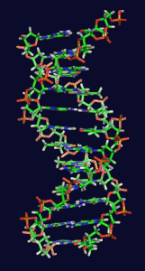 """Can DNA be changed and rewritten like computer code?"" See student question. Image by Zephyris at the English language Wikipedia"